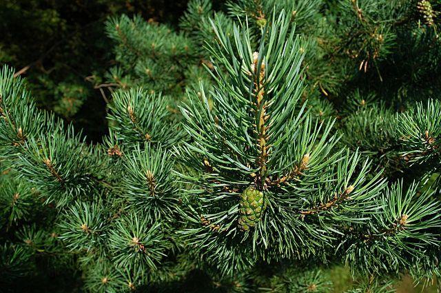 Мужчина решил сэкономить деньги на покупке новогоднего дерева, которое стоило всего 200 рублей.