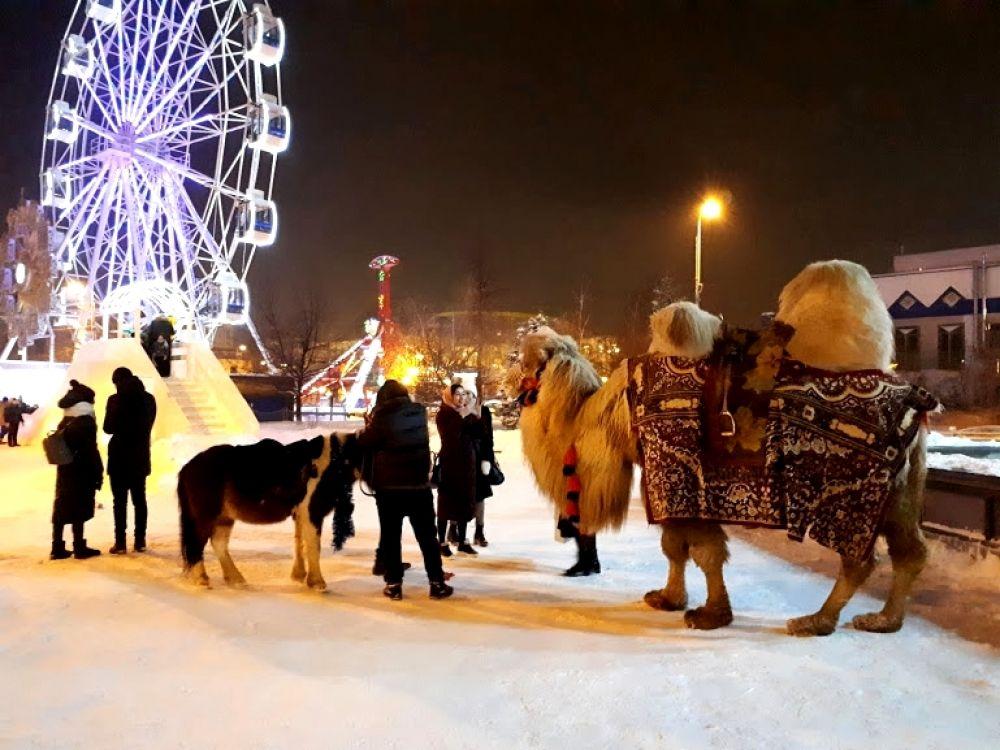 Задумчивый верблюд с подружкой-пони. Цветной бульвар в Тюмени.