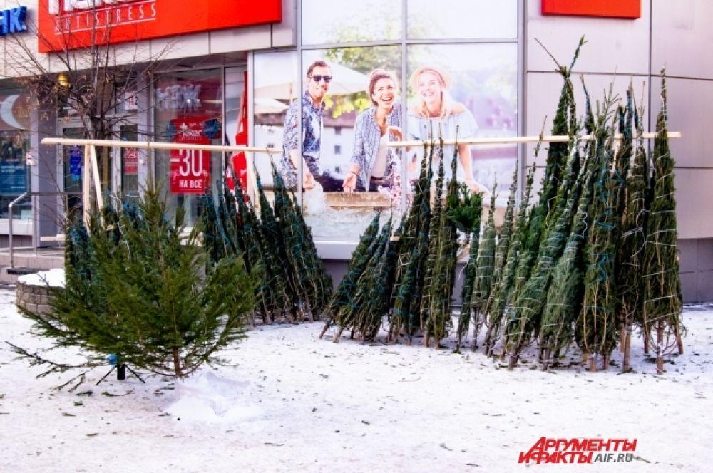 Ёлочные базары в Иркутске должны были открыться 15 декабря. Однако найти живую ель стало возможным только после 20-го.