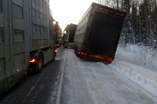 В каждом грузовике находилось по 34 особи крупного рогатого скота.