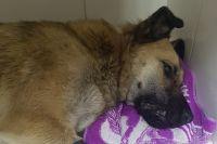 Отравившуюся собаку не удалось спасти.