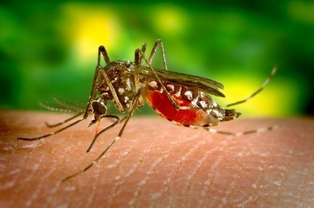 Три случая малярии обнаружили в НСО в 2018 году.