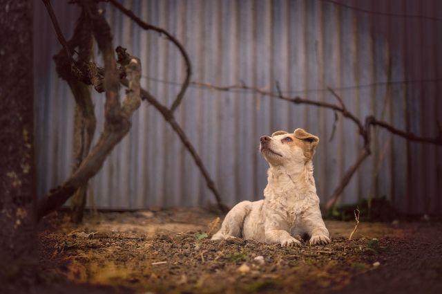 Жители Прикамья спасают собаку, изувеченную неизвестными.