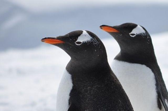 Тюменцы отпразднуют день пингвина, «посетив» южный полюс героями сказок