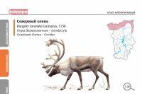 144 вида включили в список исчезающих животных.
