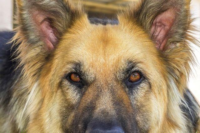 В Бузулукском районе полицейская собака помогла раскрыть кражу