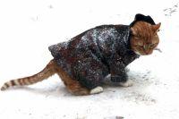 «Ой, мороз, мороз»: Минздрав посоветовал, как избежать переохлаждения