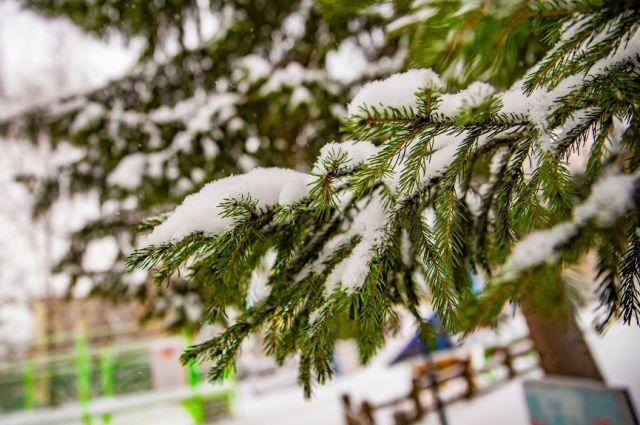 О погоде в Хабаровском крае и ЕАО 11 января.