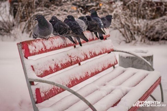 Морозы вернутся ненадолго.