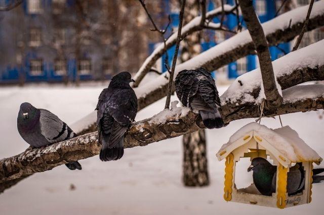 О погоде в Хабаровском крае и ЕАО 12 января.