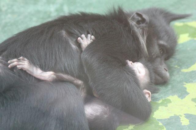 У родителей новорожденного Стефана и Фани это уже третье потомство.
