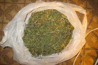 Полиция изъяла у мужчины несколько кустов наркосодержащих растений и 320 граммов марихуаны.