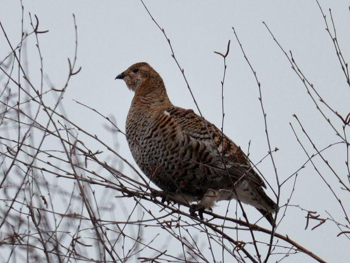 Эксперты отметили стабильность популяций краснокнижных птиц в зоне отчуждения.