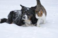 Синоптики обещают тепло и небольшие снегопады.