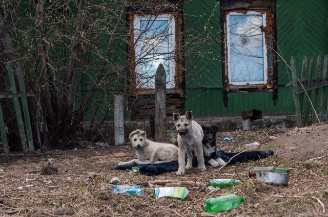 Остров Молокова уже давно превратился в пристанище для бездомных собак.