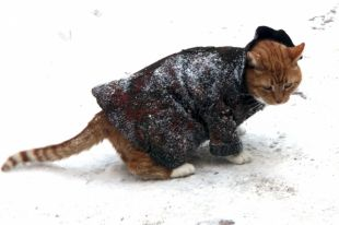 Синоптики предупредили о резком снижении температуры до 15 градусов мороза