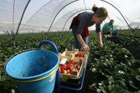 Украина будет бороться с нелегальной трудовой миграцией в Польшу, - Рева