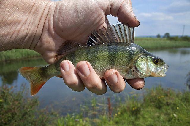В пяти районах Хабаровского края рыбалка может не состояться.