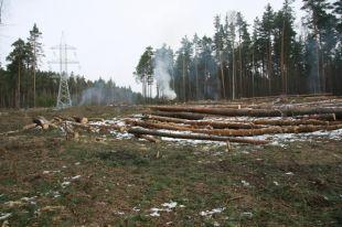 В 2018 году удалось выявить 212 случаев незаконной вырубки леса.