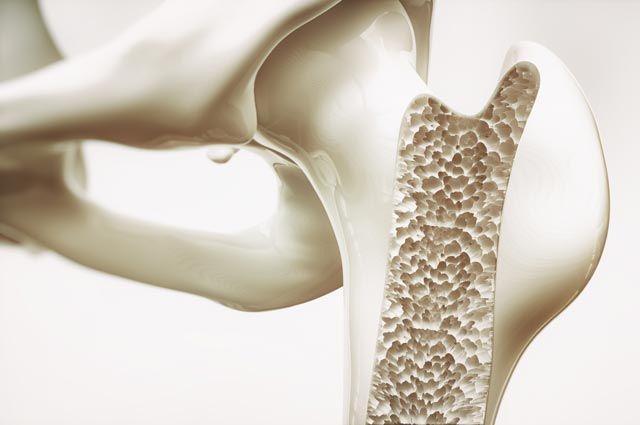 Что за сосуды нашли учёные в костях человека?