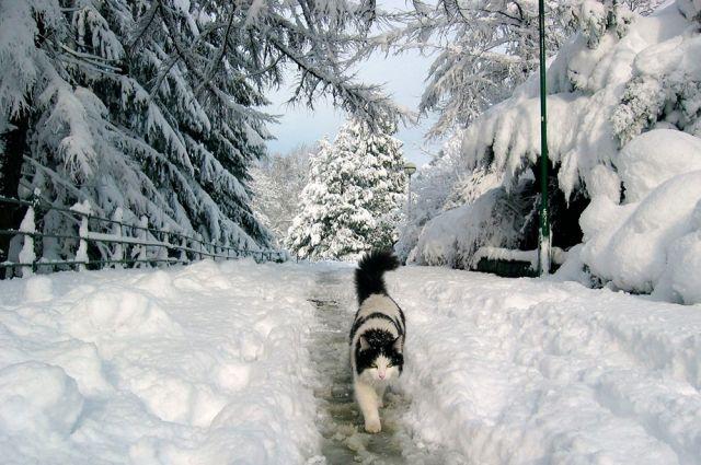 Снегопады будут, но не сильные.