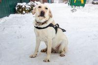 Специалисты рассказали о внезапной злости у собак
