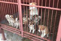 Подозреваемый в жестоком обращении с животными на данный момент задержан.