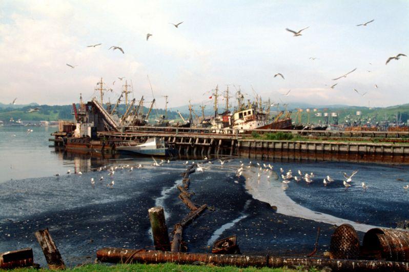 Рыболовецкие суда у берегов Шикотана.