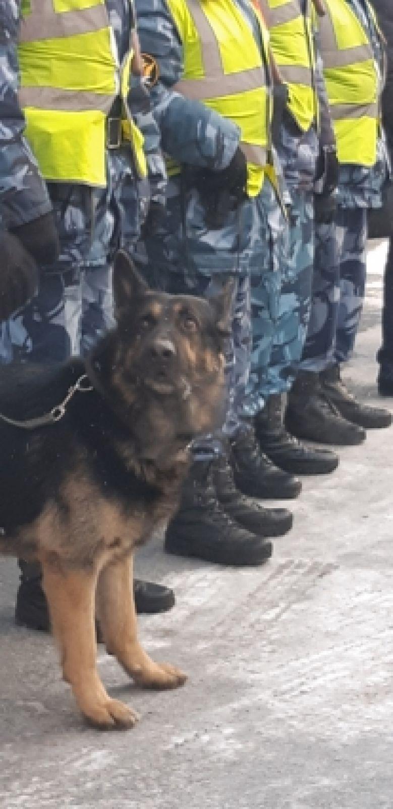 Полноправный сотрудник службы – Стэн, вице-чемпион России по собачьему многоборью.