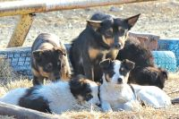 Безнадзорных животных после обследования, вакцинации и стерилизации выпускают в естественную среду