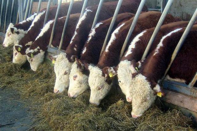 Курс «Школа животновода» помогают людям научиться заниматься своим хозяйством