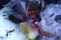 Собака Люська была доброй и спокойной.
