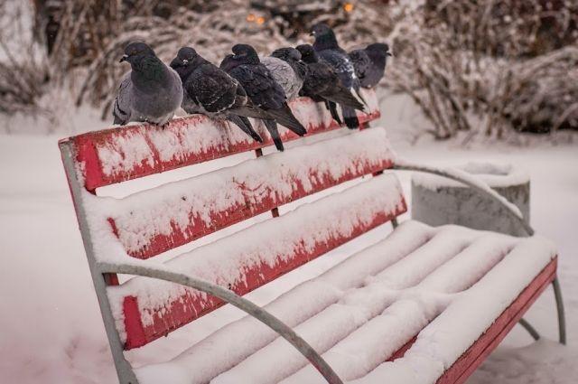 Резкое похолодание ожидается в ночь на 29 января.