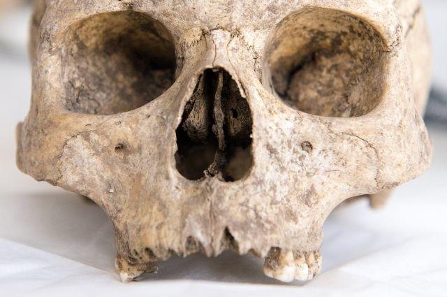 Ученые установили, когда древние люди появились в Сибири - Real estate