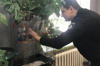 Пернатый спецназ: в Киеве полицейские спасли попугая и взяли его на работу