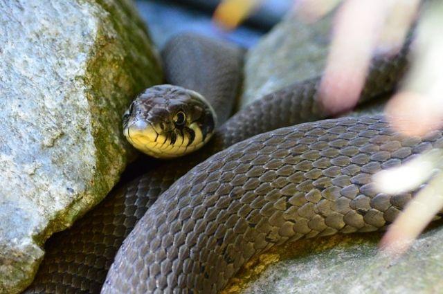 Змея вернулась домой.