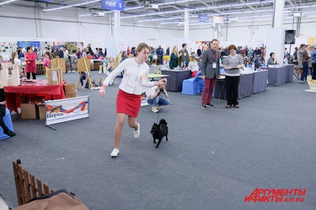 Участники демонстрировали не только внешний вид собак, но и их способности.