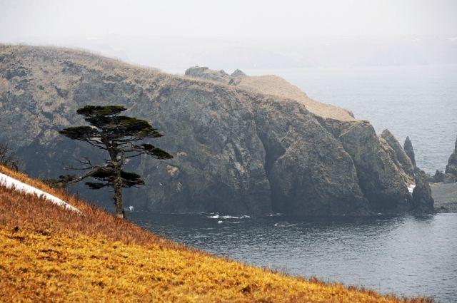 Японское издание считает Курильские острова идеальным местом для ракет США 73e2ae6599ed3