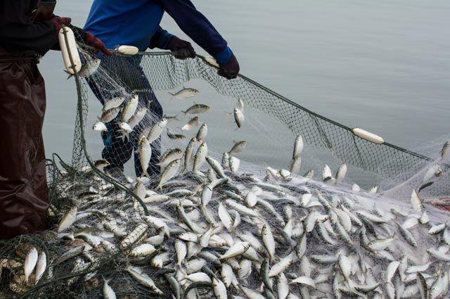 Прибыльный рыбный бизнес– хороший повод, чтобы его захватить?