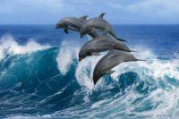 Дельфину нужно побыстрее утолить голод и заняться чем-то другим.