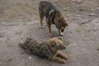 По словам пострадавшей женщины, на трамвайной остановке на улице Крылова её окружила стая из пяти бродячих собак.
