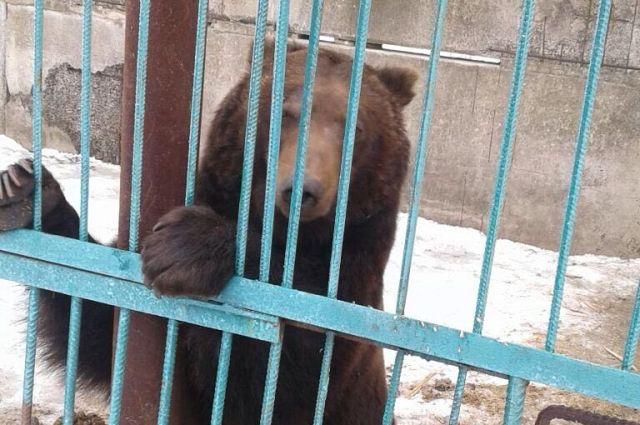 В Донецкой области из частного зоопарка изъяли пять медведей