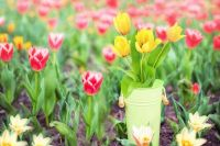 В теплицах Ноябрьска выращивают более 20 тысяч цветов