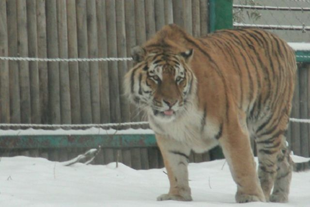 В Тюменской области закрыли сайты о продаже диких животных