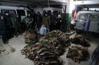Житель Тольки за убийство 40 соболей может сесть в тюрьму на пять лет