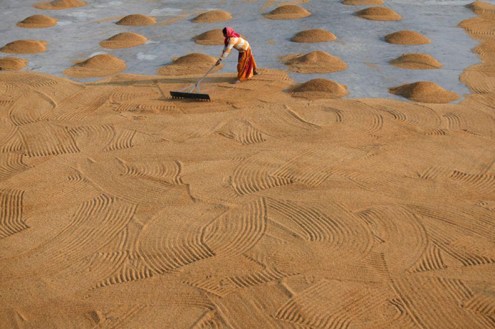Женщина раскладывает рис для просушки на мельнице в Калькутте, Индия.
