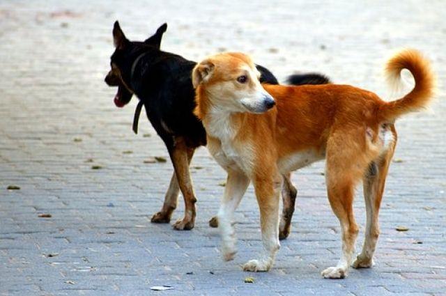 В разряд бродячих зачастую попадают собаки, за которыми не следят их хозяева.