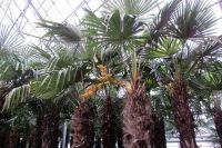В краевой столице южные деревья живут с 2001 года.