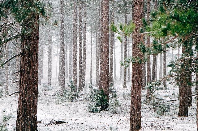 Тюменцы стали чаще брать лес на строительство