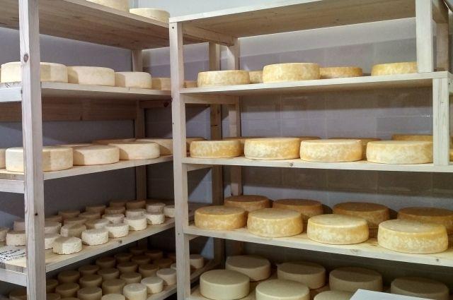 В Тюменской области варят разные сорты сыров